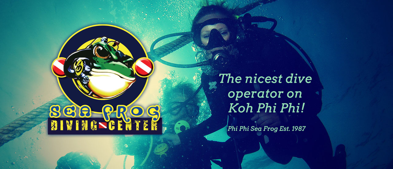 Diving Phi Phi Island with Sea Frog Diving Center - The nicest dive operator on Phi Phi Island