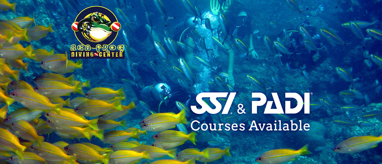 Diving Phi Phi Island with Sea Frog Dive Centre - SSI and PADI Courses Available